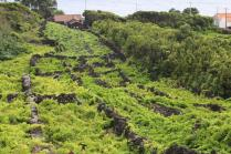 UNESCO vineyard - Pico