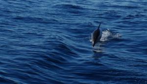 when you see dolphins jumping in deep blue water, life is good